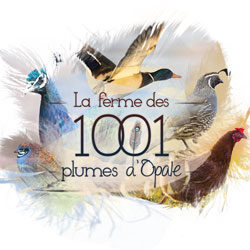 Les 1001 Plumes – Flyer